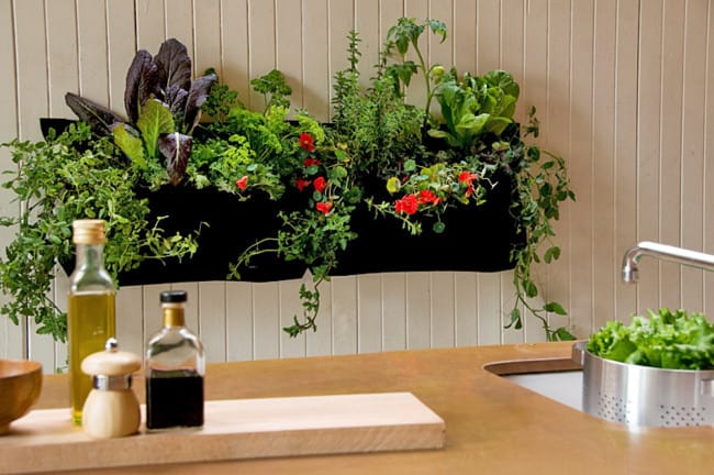DIY Apartment Garden Example