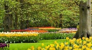 flower-garden-in-park