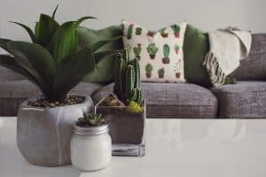 Plants for Apartments