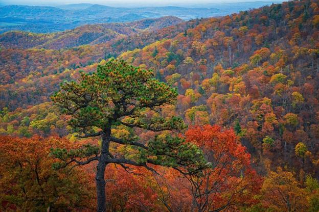 Perfect Fall Foliage Views